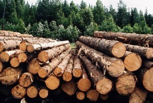 Industrial woodchipping will put an end to the illegal logging